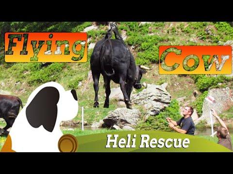 Flying Swiss Cow