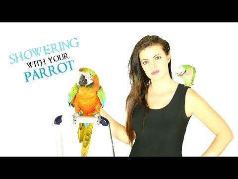 Do you er with birds🐦🚿  PARRONT TIP TUESDAY