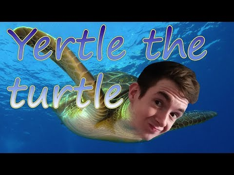 Yertle The Turtle!