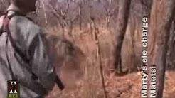 Elephant charges hunter!