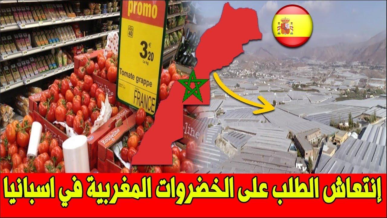 عـاجل .. الفلاحون الإسبان غاضبون .. الطماطم المغربية تتفوق عليهم في أسواق أوروبا وداخل بلادهم
