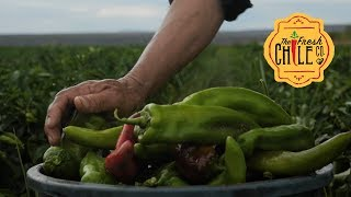 Fresh Hatch Green Chile from Hatch, New Mexico