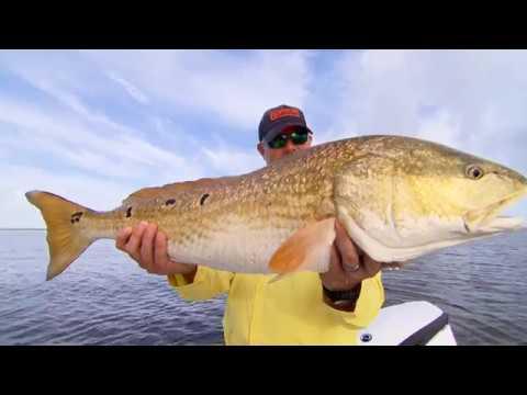 Fishing For Bull Reds Venice, Louisiana