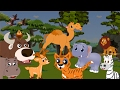 Hewan Liar | Gorila, Buaya, Unta, Jerapah, Serigala, Beruang |  Suara Binatang Untuk Anak-anak
