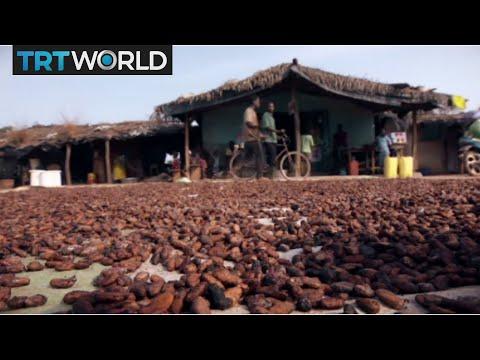 Ivory Coast's cocoa controversy