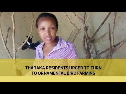 Tharaka residents urged to turn to ornamental bird farming