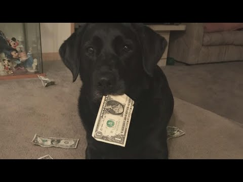 Money-Loving Dog Steals Cash From Owner's Purse To Trade For Tasty Treats