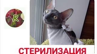 ❤️Как ухаживать за кошкой после СТЕРИЛИЗАЦИИ?❤️ Выход из НАРКОЗА ❤️Советы  RusLanaSolo❤️