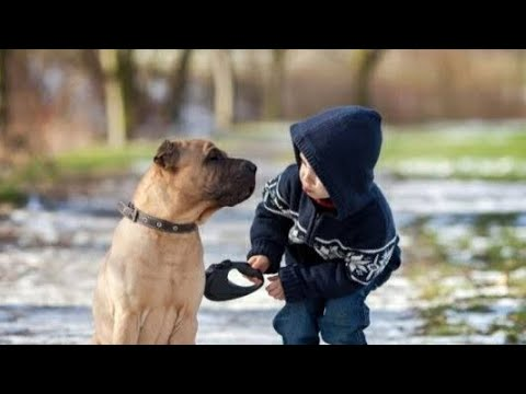 Funny Animal and Kids FUNNY VIDEOS
