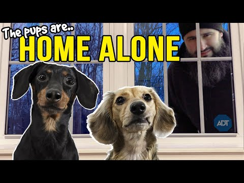 Ep#13: The Dogs are HOME ALONE - then Puppy Burglar Arrives!