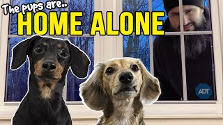 Ep#13: The Dogs are HOME ALONE  then Puppy Burglar Arrives!
