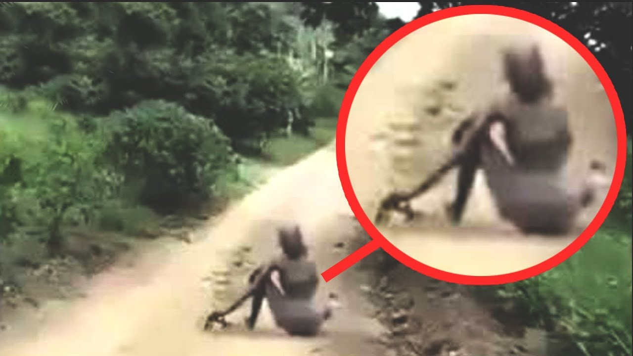Mysterious Creatures Caught On Camera Spotted In Real Life