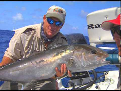 Key Largo Offshore Wreck Fishing for Monster Amberjack Fish