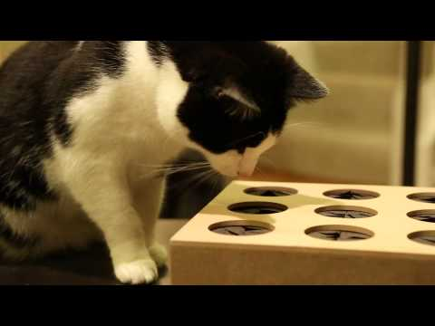 Thumbnail for Cat Video Cat Whack a Mole from ThinkGeek