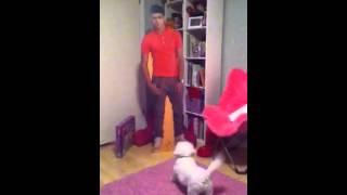 Dog Hates Zayn