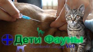 Укол собаке подкожно 2.0 Автор ветеринар