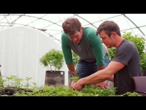 Jordan and Jesse Stanley: On growing hemp responsibly