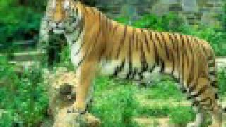 Play El Tigre Y El Potosino