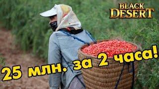 Black Desert (RU) - Собиратель онлайн! Заработок серебра за 2 часа 25 миллионов.