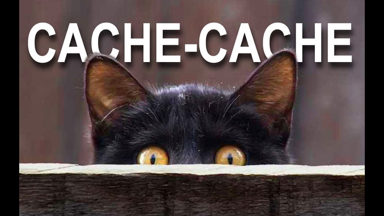 Cache cache parole de chat youtube - Dessins de chats rigolos ...