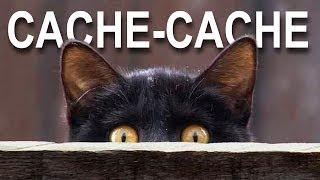 CACHE-CACHE - PAROLE DE CHAT