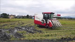 雨の合間の稲刈り、湿田AG6100R走破風景。2時間後ゲリラ豪雨に叩かれる。