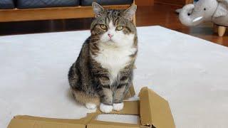 壊れた箱とねこ。-Broken box and Maru.-