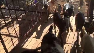 Capricorn Organic Goat Farm , Karjat