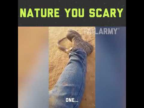 NATURE YOU SCARY