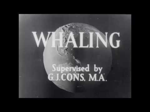 1940s whaling in the Antarctic