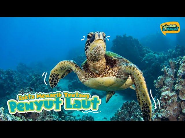 Tahukah Si Manja Episod 1 - Penyu Laut