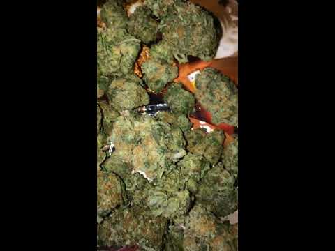 Pink Kush strain  ((( More subs and likes please)))  I say Rockstar by mistake