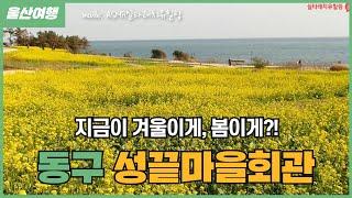 인생샷 스팟! 울산 여행 _성끝마을 / 울산여행 / 청…