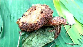 【古代料理】ジャングルにあるものだけで料理したら衝撃の結果に…