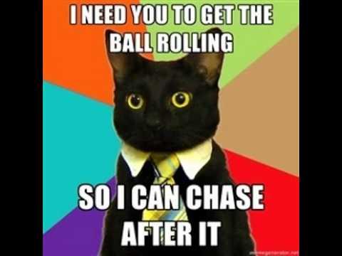 Business Cat Memes Youtube