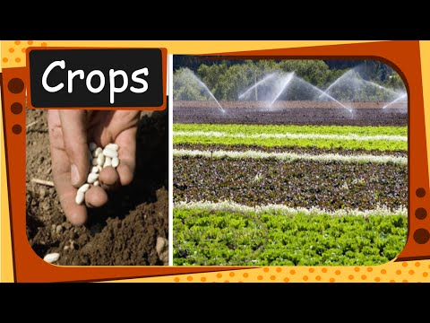 Science - How to grow crops - English