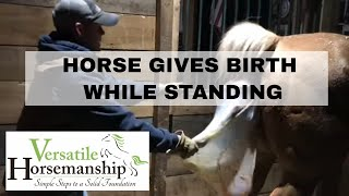Horse Gives Birth While Standing // Versatile Horsemanship