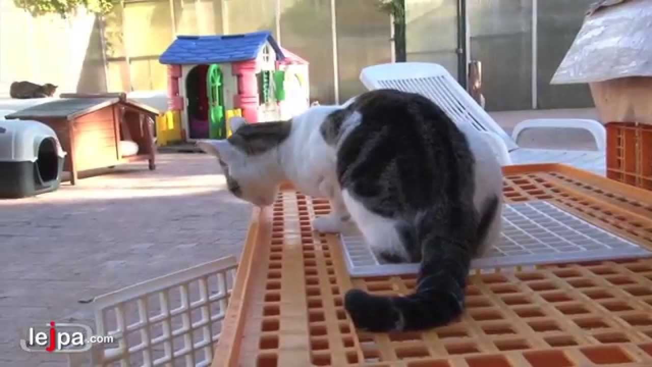 Quel chat adopter dans un refuge ? - YouTube