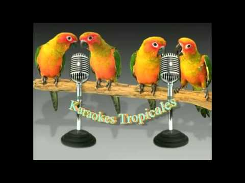 Karaokes Tropicales-Volver A Amar
