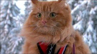 Кот в упряжке везет хозяйку на лыжах(, 2016-02-16T16:04:51.000Z)