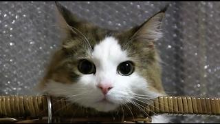 ノル猫、姫ちゃんがビックリした映像です。気の毒だけど、思いっきり笑...