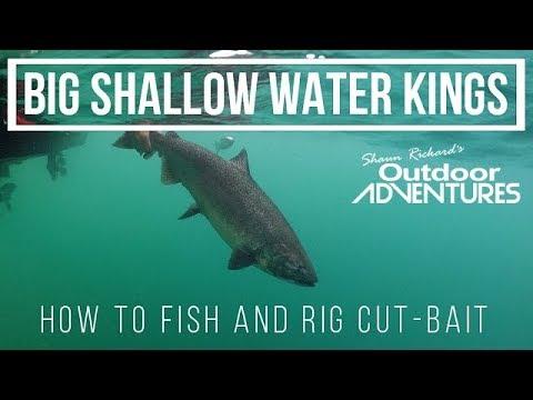 BIG Chinook Salmon Using Cut Bait | Fishing Lake Ontario | Ft. Kevin Wong