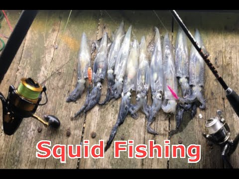 Cape Cod Squid Fishing (Catch, Clean, And Cook)