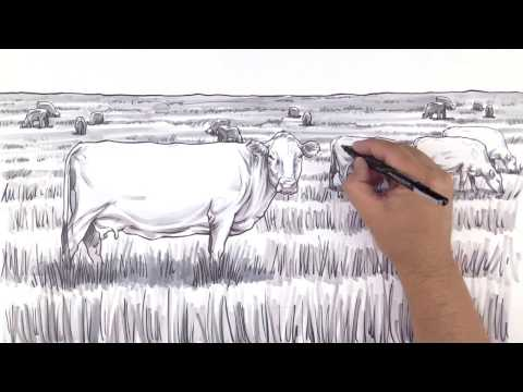An inside look at rumen microbes in cows