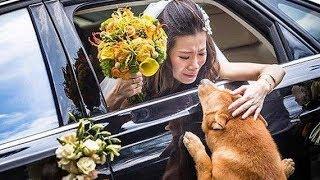 妹妹好心收养流浪狗4年,出嫁时,流浪狗的举动让全家人后悔!