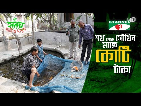 Millionaire Ornamental Fish Farmer Mridul | Channel i | Shykh Seraj | সৌখিন মাছে কোটি টাকা |
