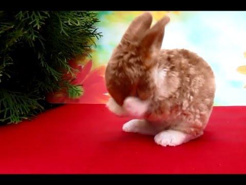 Карликовые кролики - YouTube