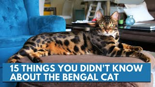 15 things you didn't know about the Bengal cat
