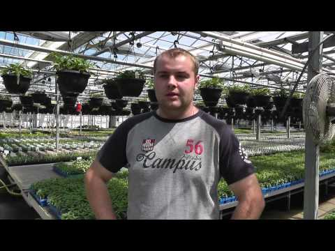 Greenhouse internship in Ohio arranged by The Ohio Program. Video in Russian language.