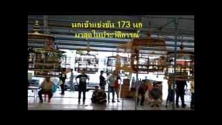Bangkok Murai Batu competition 2 nd